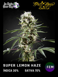 super lemon haze floreciendo