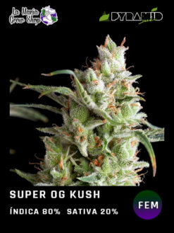 super og kush floreciendo