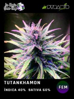 tutankhamon floreciendo