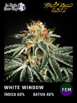 white widow floreciendo