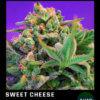 Sweet Cheese fast version floreciendo