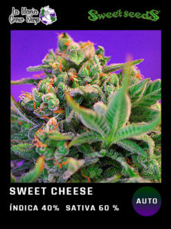 Sweet Cheese fast version floreciendo