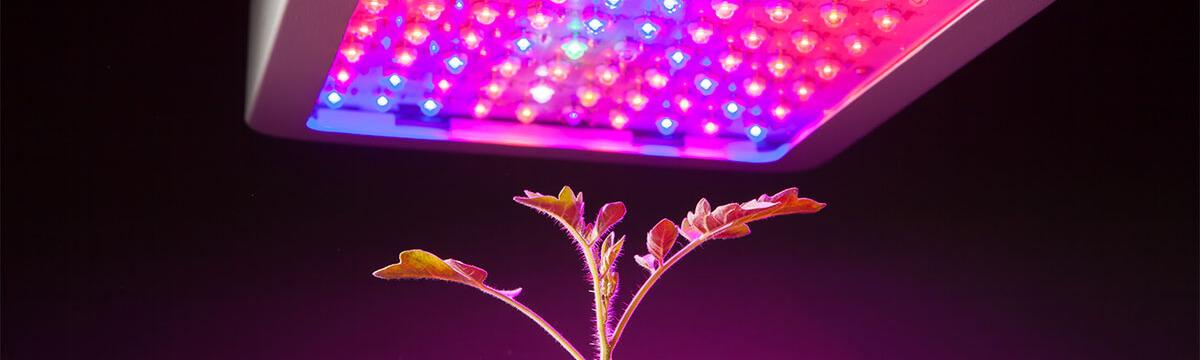 Consumo Focos LED