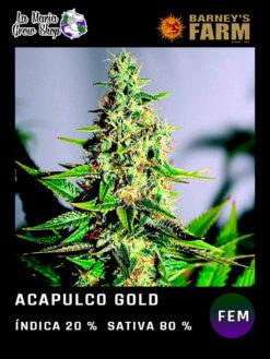 acapulco gold