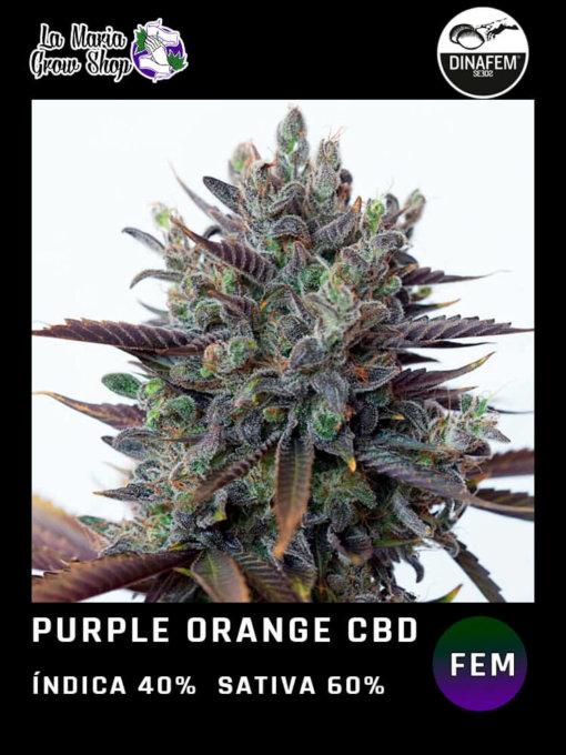purple orange cbd floreciendo