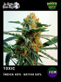 toxic floreciendo