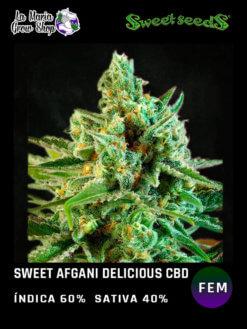 sweet afgani floreciendo