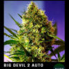 big devil auto 2 floreciendo