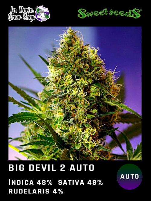big devil auto 2 floreciendo