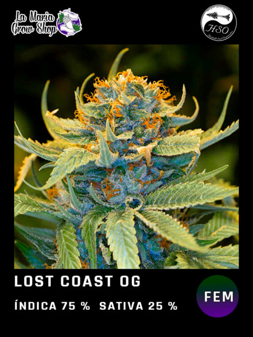 lost coast og floreciendo