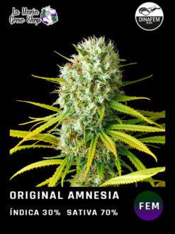 original amnesia floreciendo