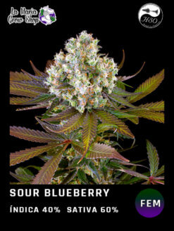 sour blueberry floreciendo