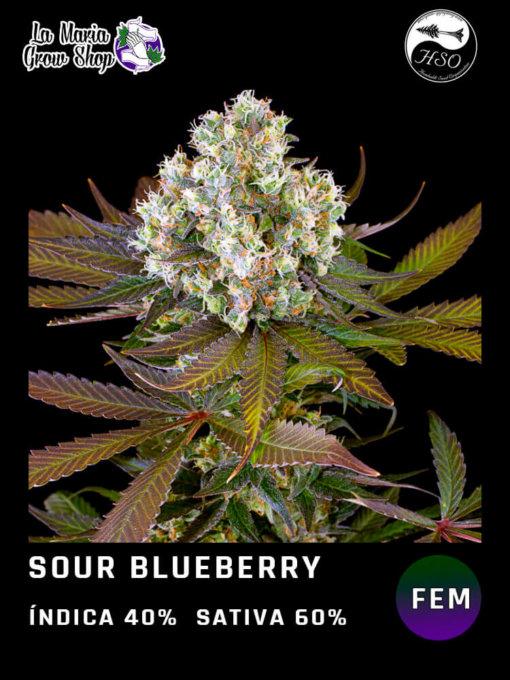 sour blueberry floreciendo