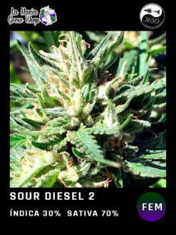 Sour Diesel Floreciendo