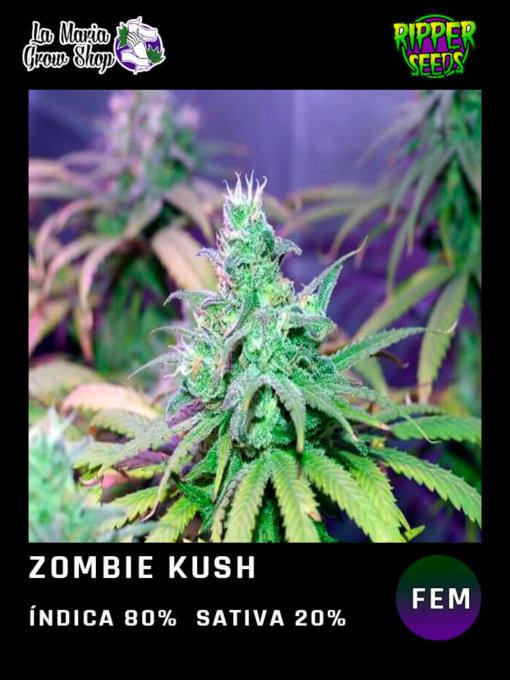 zombie kush floreciendo