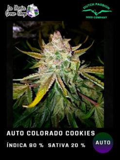colorado cookies auto en floracion
