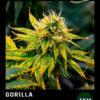 gorilla en floracion