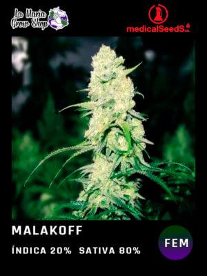 Malakoff en floracion