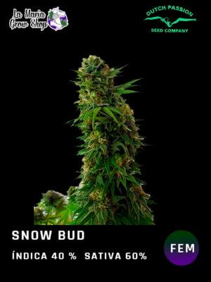 snow bud en floracion