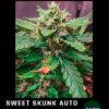 aweet skunk auto en floracion