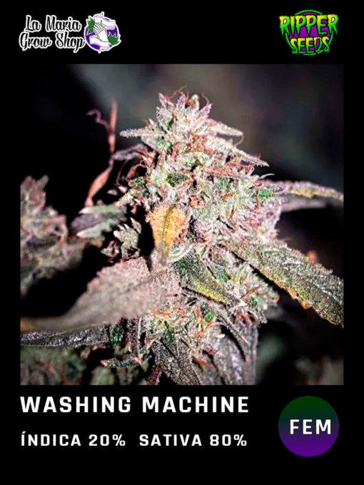 washing machine en floracion