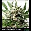 blue amnesia xxl floreciendo