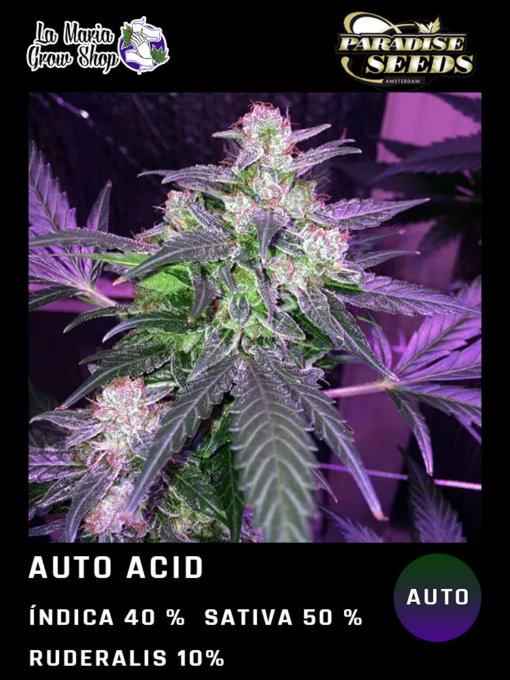 auto acid floreciendo