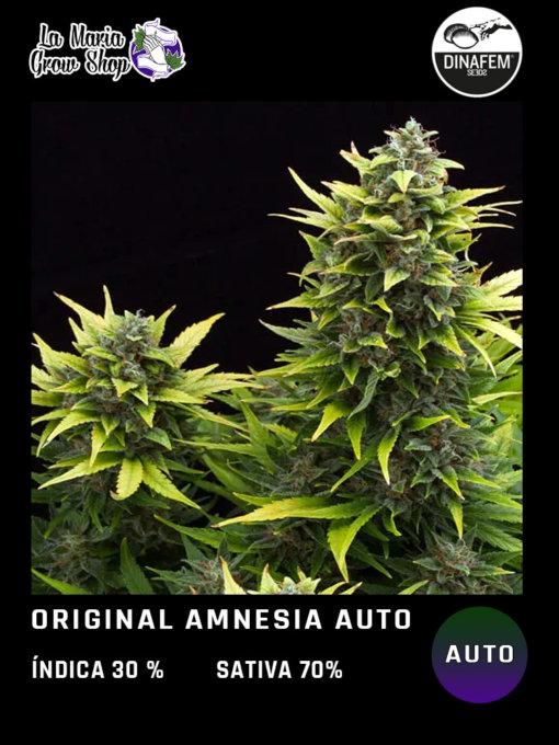 amnesia auto floreciendo