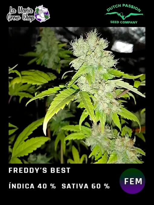 Freddy's Best de Dutch Passion